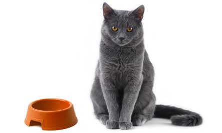 cat-food-bowl.jpg