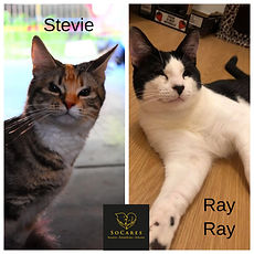 Ray and Stevie profile.jpg