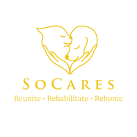 Full-Logo-Yellow-Transparent-01.png