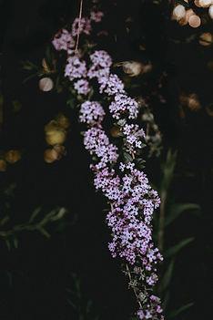 Black Fryday en floristeria la alqueria aprovecha sus descuentos en flores con envio a domicilio en valencia