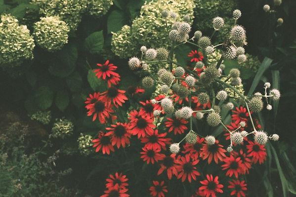 Flowers%201-1_edited.jpg