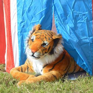 Tiger ($15) Tent ($10)