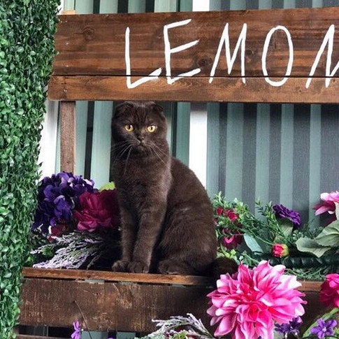 Lemonade Stand. Have 2 available. Can be customized/personalized to your event.