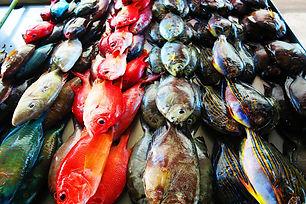 Fish-Market-Apia-Samoa.jpg