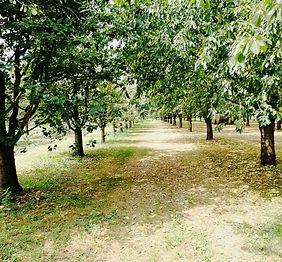 Gengenbach Allemagne distillerie wild arbre