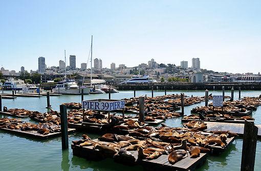 San Francisco fisherman's wharf sud
