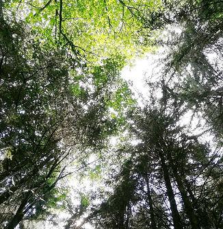 Gengenbach Allemagne forêt noire vue