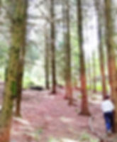 Gengenbach Allemagne forêt noire ballade