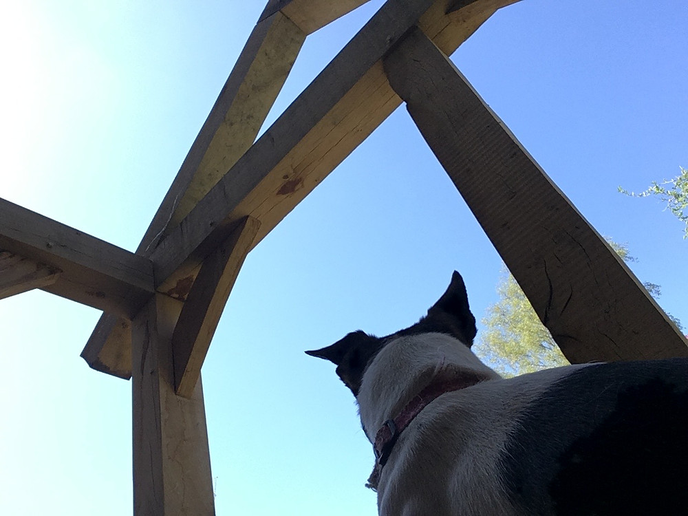 Bella the dog inspecting the workmanship