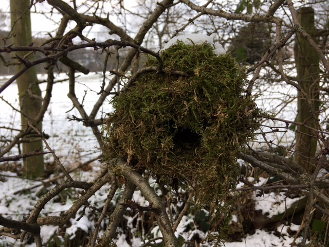 A little birds nest I spotted on my dog walk today - perfect