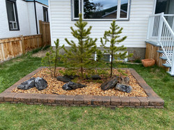 Planter Box with Native Trees