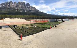 Native Plant Field Nursery, Ready for Installation