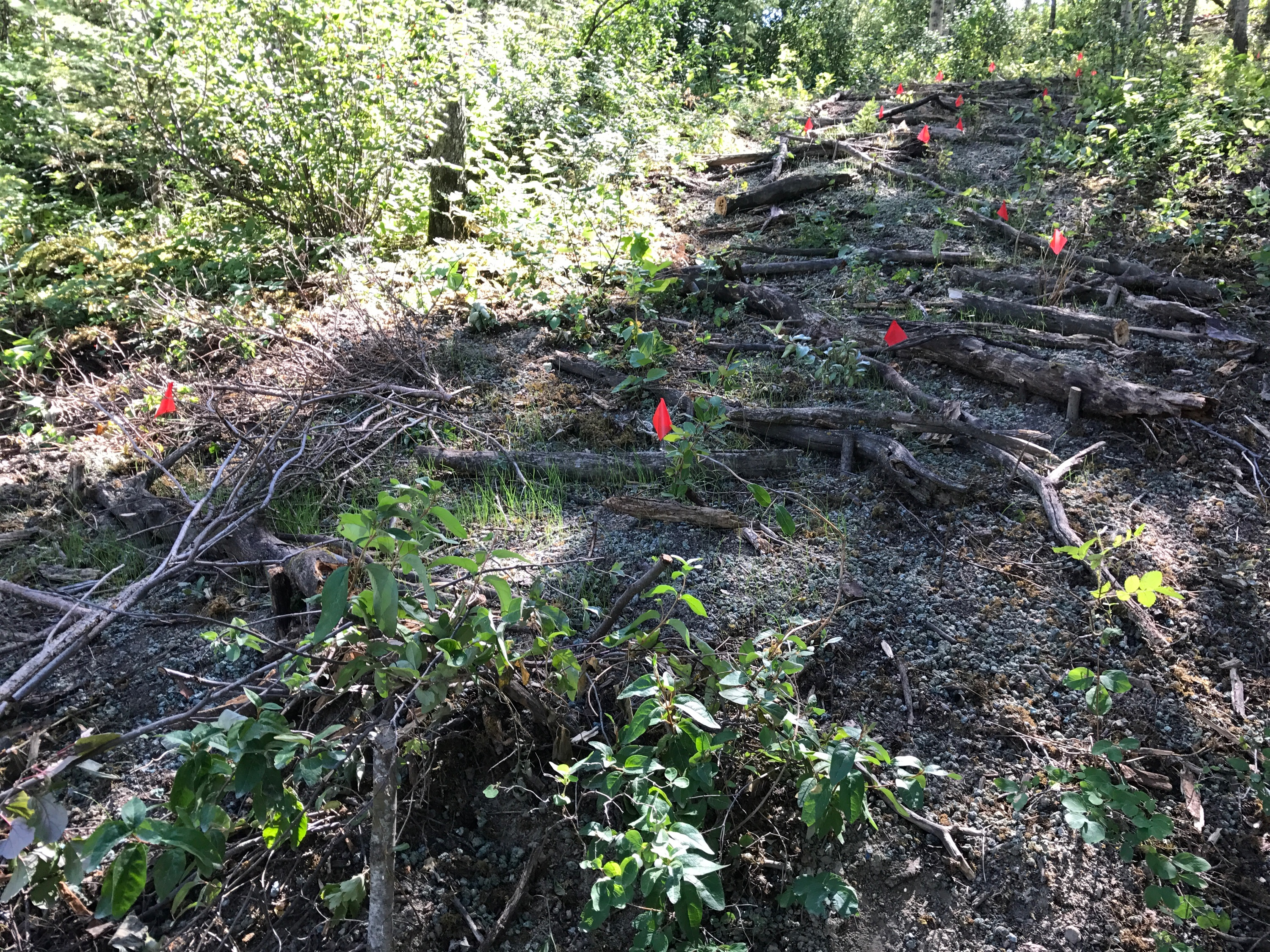 Site Reclamation, Terracing, and Vegetation Installation