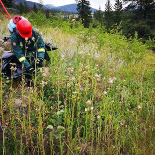 Herbicide Application and Weed Management