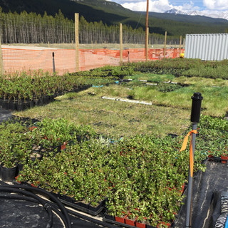 Native Plant Materials Custom Harvested and Propagated for DNA Retention