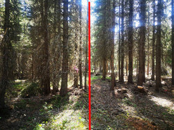 Untreated Vs Treated Forest Area for Fire Risk Reduction