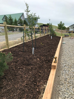 Planter Boxes and Tree Installation