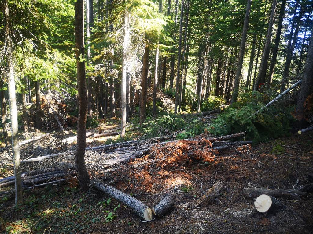 Forest Thinning & Cleanup