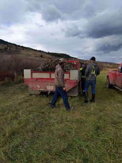 Sustainable Willow Harvest and Supply for Bioengineering Projects