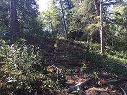 Restoration of Site after Disturbance. Terracing, CWD, Planting, Mulching, Seeding.
