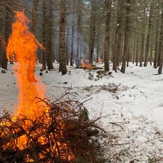Forest Debris Cleanup and Safe Burning
