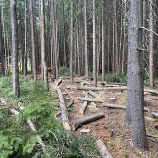 Firesmart Forest Fuel Modification