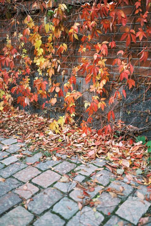 Autumn_Wedding_in_Myllysali,_Suomenlinna