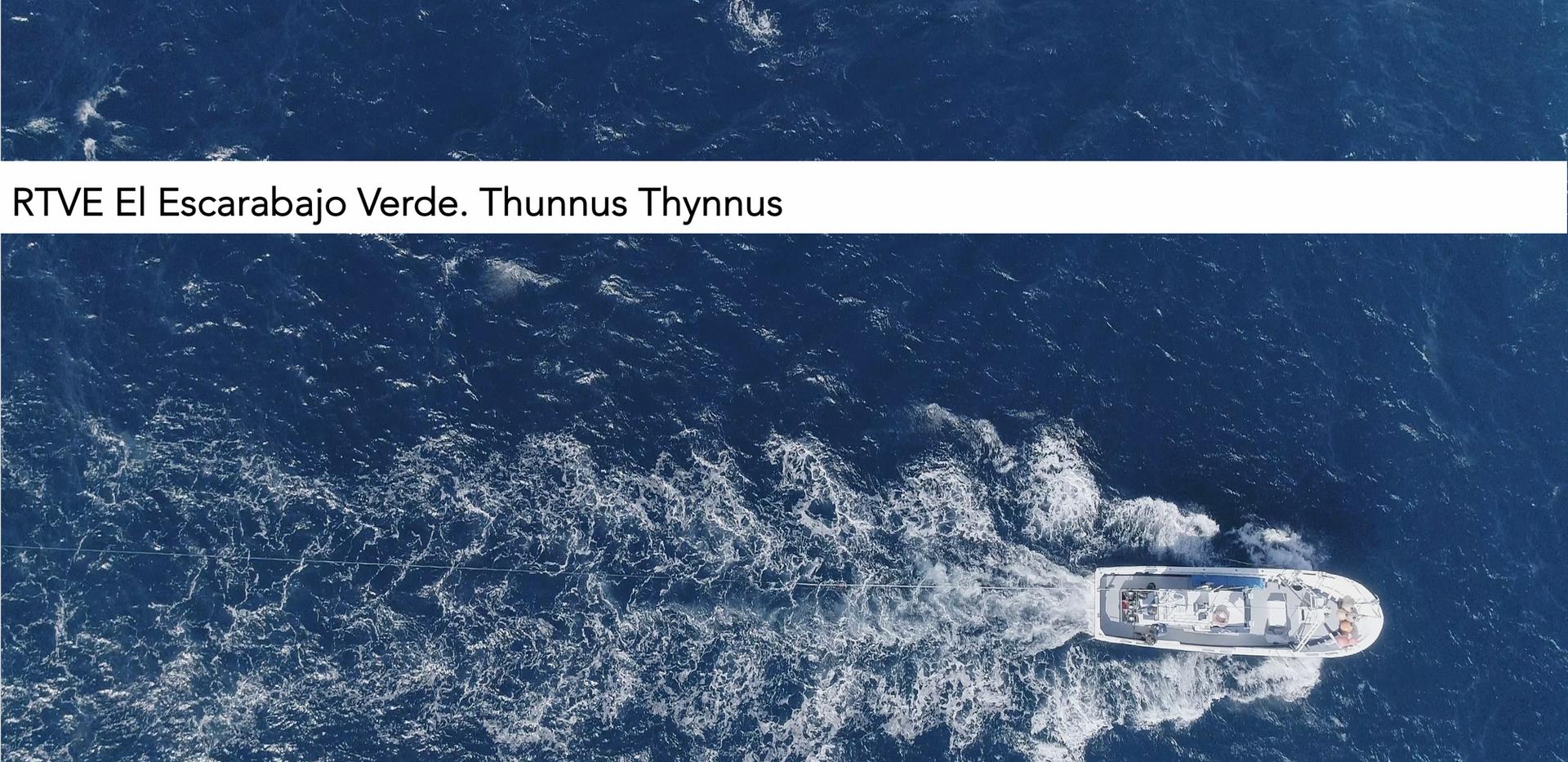 Thunnus Thynnus