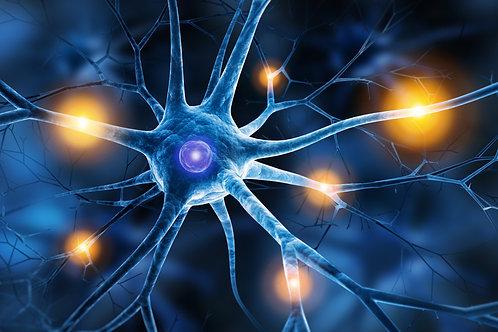 SYMPOSIUM 2020 - Medicine of the Future