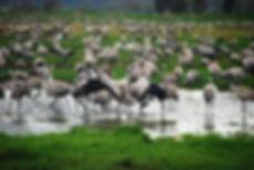 hula reserve.jpeg