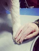 Pet Therapy Cani Bergamo
