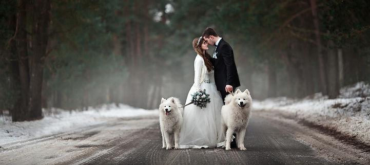 dog sitting matrimoni bergamo