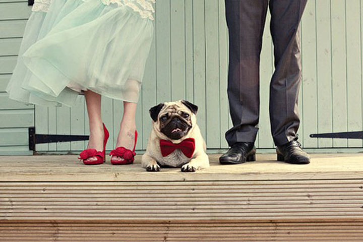 wedding dog sitter bergamo