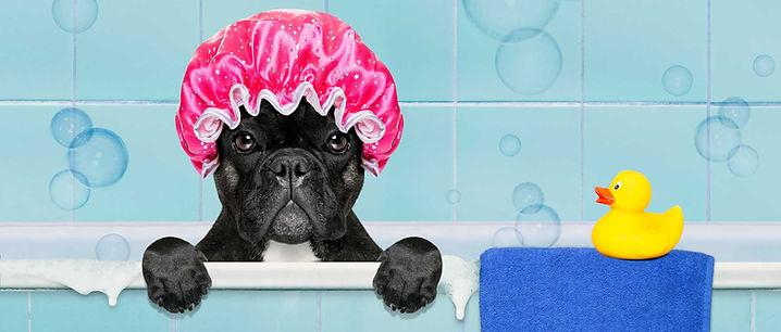 ozonoterapia cani valle brembana