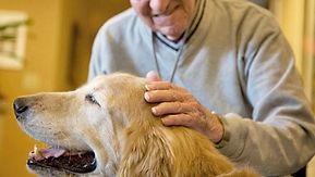 Pet Therapy Rsa Bergamo