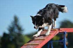 Agility Dog Bergamo