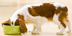 Alimenti Naturali Cani e Gatti