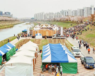 Cherry Blossom Festival, Gwangmyeong, April 2015