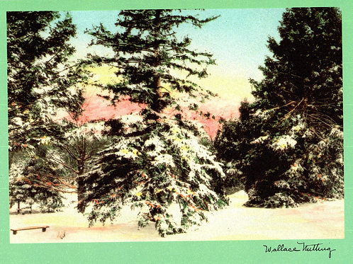 Wallace Nutting Evergreen Tree Card