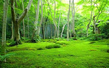 Tree Background 3 Day.jpg