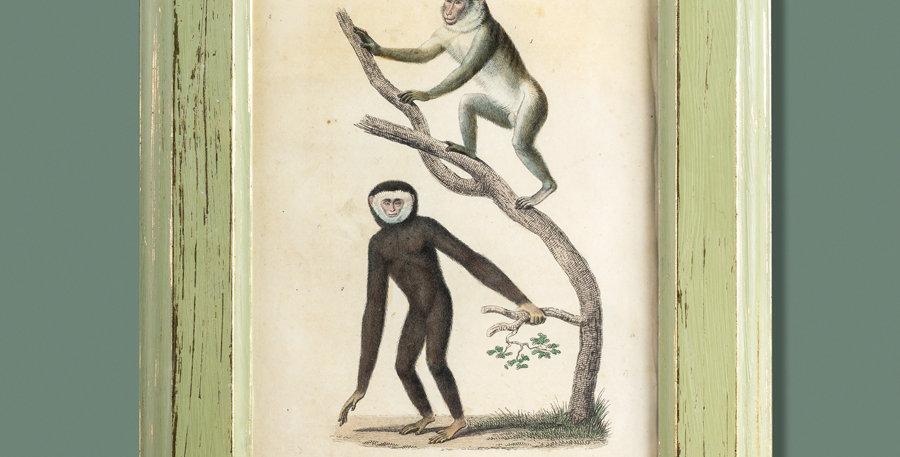 Grabado. Le Magot. Le Gibon. 1844