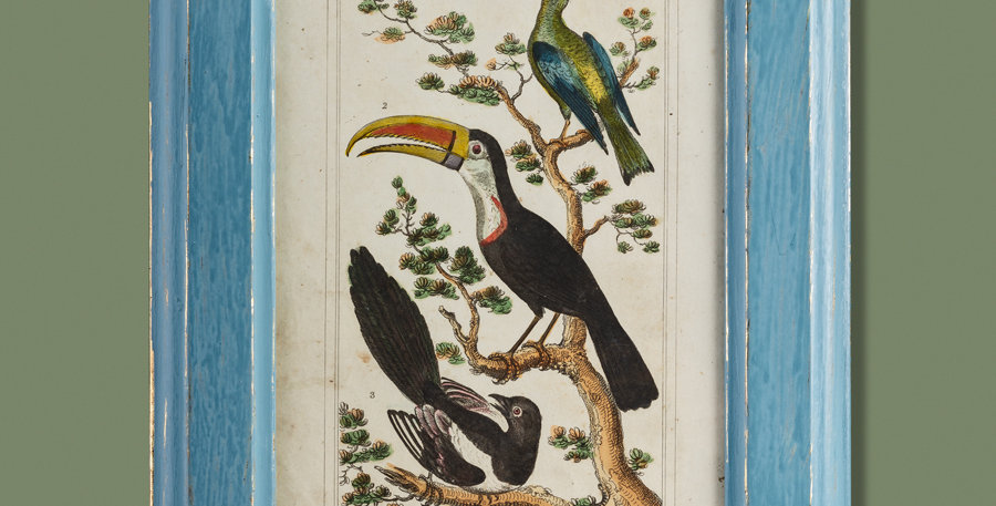 Grabado original. Animated nature. 1824