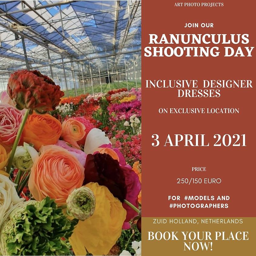 Ranunculus Flower Greenhouse shooting day