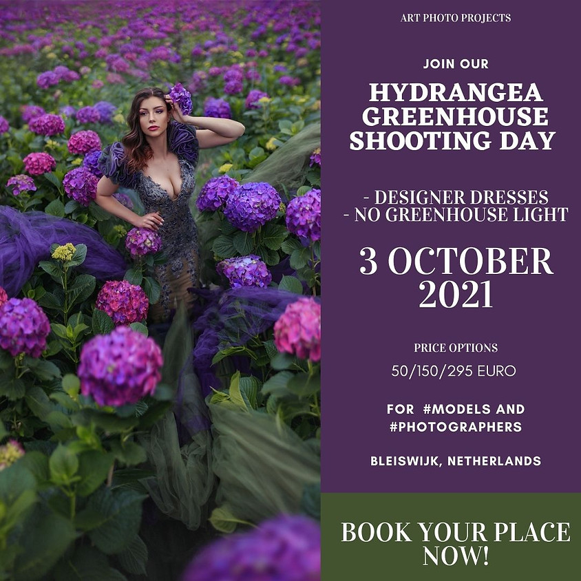 Hydrangea greenhouse shooting day