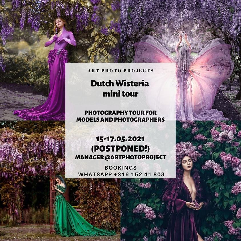 Dutch Wisteria photography portfolio mini tour
