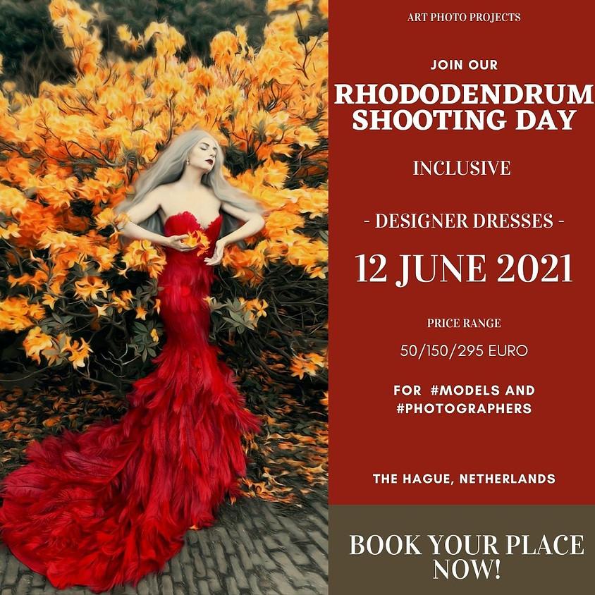 Rhododendrum flowers portfolio shooting day