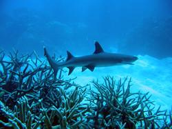 Shark Alley