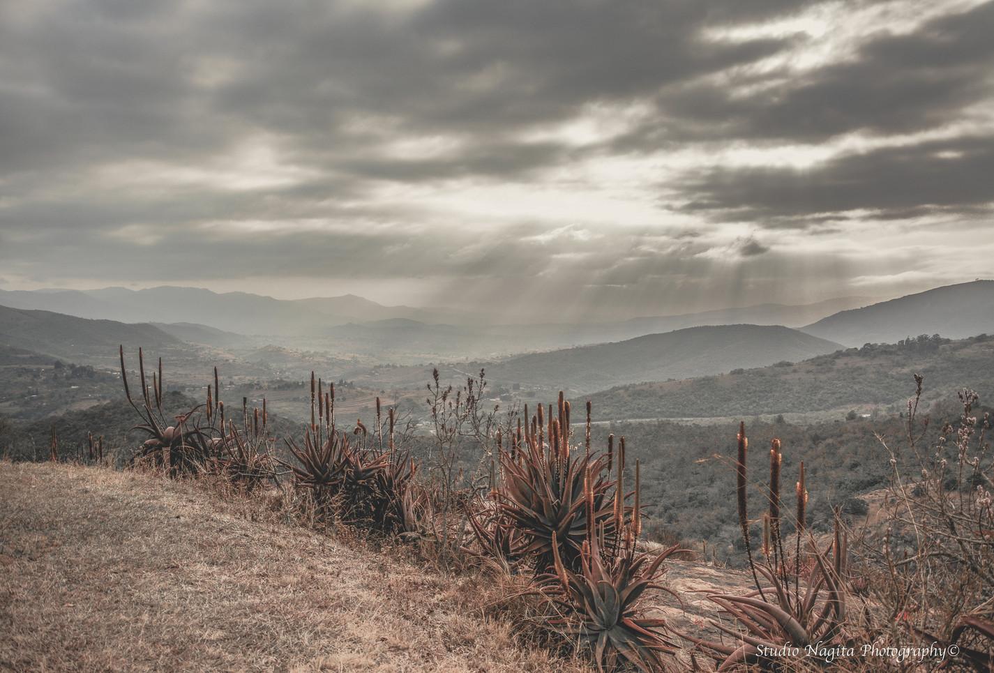 Swaziland Aloe Landscape