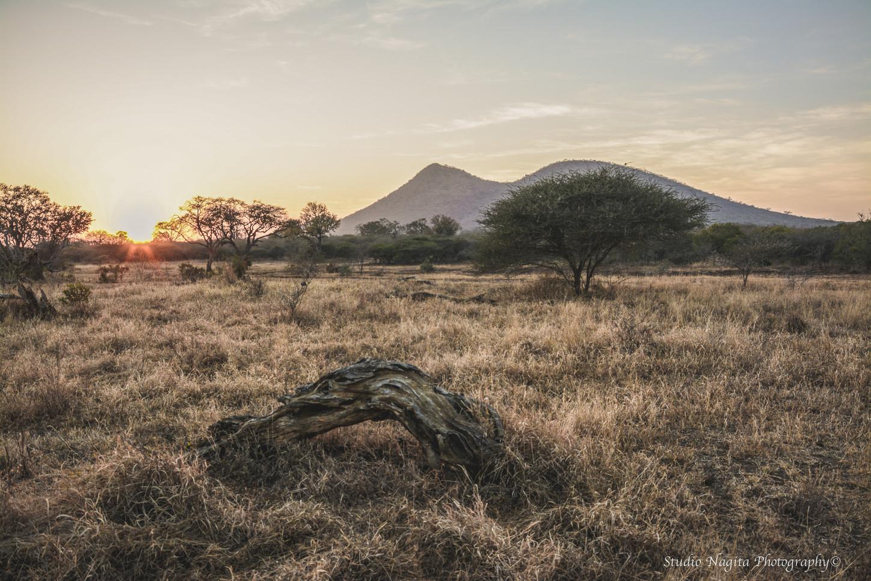 Safari Sunrise Landscape