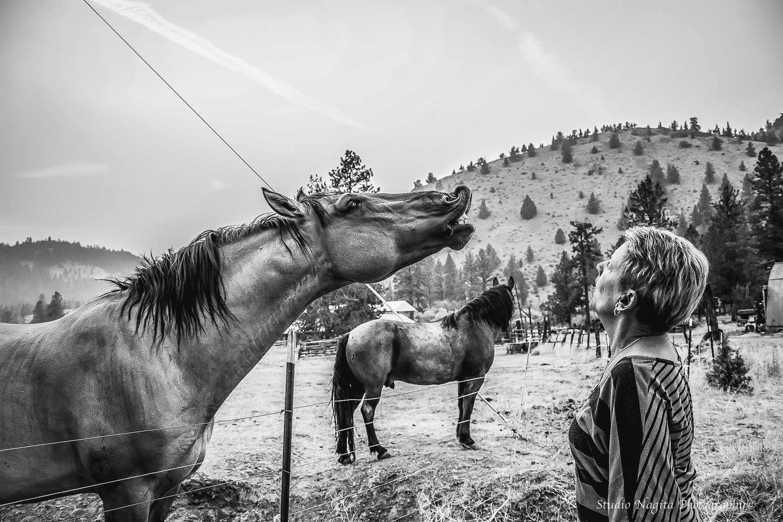 Talking Horse, Black & White